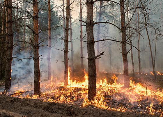 Summer Weather Wildfire Safety Plan